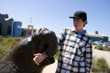 Kyle and elephant seal